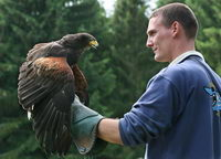 Georg mit Harris Hawk